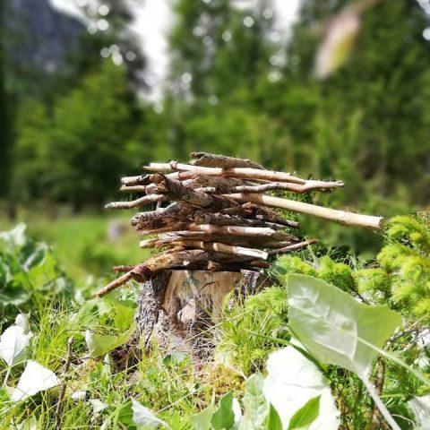 Il bosco: spazio per sperimentare e crescere nella vastità della natura